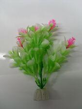 plante blanche
