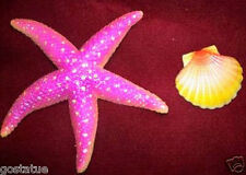 starfish shell mold set abs plastic sea star fish mould