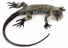 Bronce de Viena-lagarto-Iguana, auténticos personaje animal-pintados bronce personaje