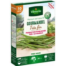 80 Graines Haricot Nain Vert Précoce Sans Fil Blanc Sprite Phaseolus Vulgaris