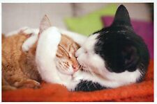 Cats Hugging, Tabby & Bicolor Black and White Cat, Cute - Modern Animal Postcard