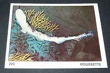 N°225 ROUSSETTE POISSON PANINI 1970 TOUS LES ANIMAUX EDITIONS DE LA TOUR