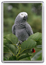 African Grey Parrot Fridge Magnet 01