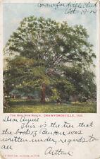 Crawfordsville In * Ben Hur Beech Tree 1904 * Book Novel Written Under *