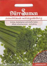 0166 Schnittlauch Miro mittelgrobröhrig Allium schoenoprasum 600 Korn Dürr Samen