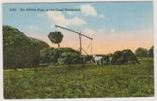USA postcard - An Alfalfa Crop in the Great Northwest (A2)