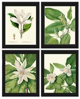 Unframed Magnolia White Flowers Botanical Print Set of 4 Antique Home Wall Art