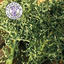 Rare Kale Seaweed Seeds 15 seeds UK SELLER