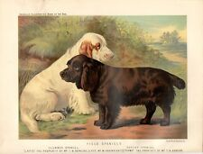 Stampa antica cani CLUMBER SPANIEL SUSSEX SPANIEL 1879 Old print dogs