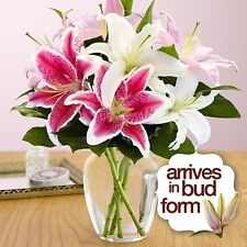 Royal Spring Lilies Bouquet Vase Gift Graduation Day Fresh Cut Mix Flowers Candy