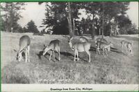 Vintage RPPC Photo Michigan MI Postcard Deer Herd Greetings From Rose City 1950