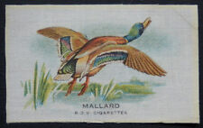 MALLARD Birds 1921 B D V Cigarette Silk VERY SCARCE