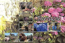 B49770 fleurs flowers lavande Bretagne  france