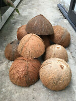 Natural Coconut Shell Bowl handcraft pet feeder Eco Friendly Sri Lanka