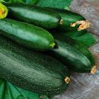 Dark Green Zucchini Summer Squash Seeds, NON-GMO, Variety Sizes, FREE SHIPPING