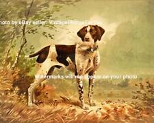 Old Vintage German Short Haired Pointer Dog Hunting Image Wall Art Picture Pic