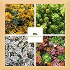 19x Sedum Steingartenpflanzen Mix Gr.M-L  Winterhart Staude Bienen Dachbegrünung
