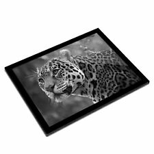 A3 Glass Frame BW - Majestic Jaguar in Nature Cat  #43070