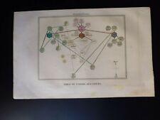 Gravure couleur 19°:mammifère: table de l'ordre des chiens