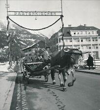 ALLEMAGNE c. 1935 - Char à Boeufs Garmisch Partenkirchen Div 4373