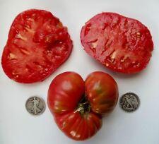 Winsall - Organic Heirloom Tomato Seeds - Delicious Beefsteak - 40 Seeds
