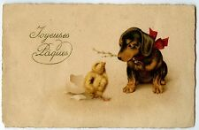 CHIEN TECKEL .DOG DACHSHUND. POUSSINS DE PAQUES.CHICKS OF EASTER.