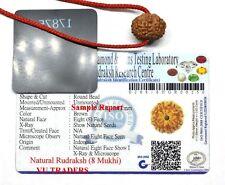 8 Mukhi rudraksha / Eight Face Rudraksh Java Bead Lab Certified Size 14-16 MM