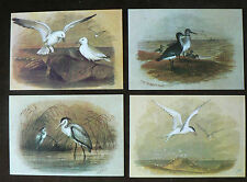 Bird Collectable Postcard Collections/Bulk Lots