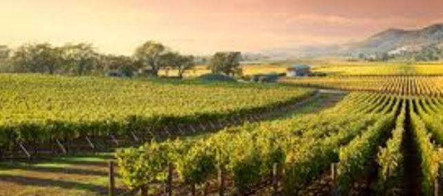 winedrumau