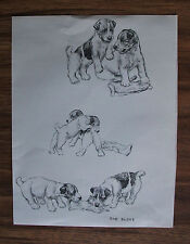 Fox Terrier Pups Dog Print The Glove K F Barker 1942 Bookplate Unmatted Adorable