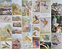 1930s-1940s Vintage Bird Artist Signed Postcards - Many Available Picks Yours.