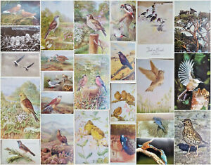 Vintage Bird Artist Signed Lovely Postcards - Many Available Circa-1940s