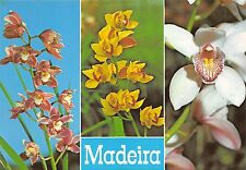 BF1471 funchal orquideas da quinta da boa vsita  Portugal