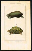1844 Geometric Tortoise & Soft-shell Mole Turtle, Hand-Colored Antique Print
