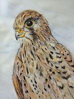 Ich zeichne Ihr Tier 🦉🐬🐟🐇🐕 ( zb Falke, Greifvogel, Fisch, Hund, Dackel...)