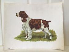 New ListingVintage Ole Larsen Lithograph Print Springer Spaniel Bird Dog 1950's * Unframed