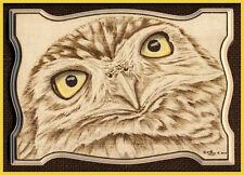 """Little Owl ACEO Ltd Ed Print """"A Little Inquisitive"""""""
