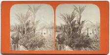 Palmiers de Bordighera Italie Italia Photo Stereo Vintage Albumine