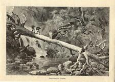 Stampa antica ESPLORATORE a PANAMA nella foresta 1885 Old antique print