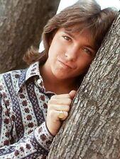 1970s David Cassidy against tree promo picture replica fridge magnet - new!