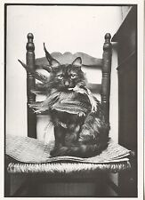 POSTCARD / CARTE POSTALE PHOTO ROLAND LABOYE CHAT DE CHEF INDIEN / CAT CHAT