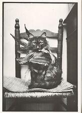 POSTCARD / CARTE POSTALE PHOTO ROLAND LABOYE CHAT DE CHEF INDIEN / CAT CHAT