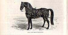 Stampa antica CAVALLO NERO DA CARROZZA COACH-HORSE 1892 Old print horses