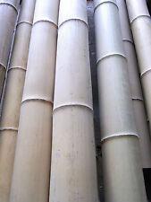 Bambusrohr Bambusstange Bambushalm Bambus Bambusrohre 1 x 9-10 x 3 m 90-100 mm