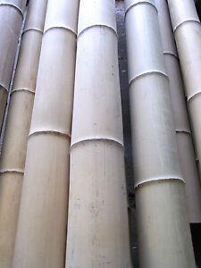 Bambusrohr Bambusstange Bambushalm Bambus Bambusrohre 1 x 7-8 x 2 m / 70-80 mm