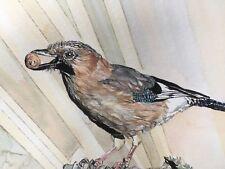 European Jay.Original Bird Watercolour Painting.Gift for Bird Watcher.Twitcher.