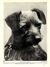 New Listing1930s Antique Border Terrier Dog Print Champion Queen o' The Hunt 3566-R