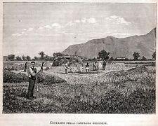 MESSINA: Contadini della Campagna Messinese.Sicilia.Trinacria.Stampa Antica.1892