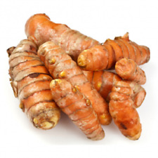 Fresh Mature Organic Turmeric Roots