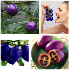 80 Seeds Indoor Potted Purple Cherry Tomato Heirloom Non-GMO Organic Plant Seeds